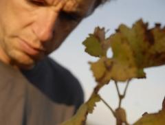 viticulture biologique, vendange manuelle, vin bio, Domaine des Pierres Bleues